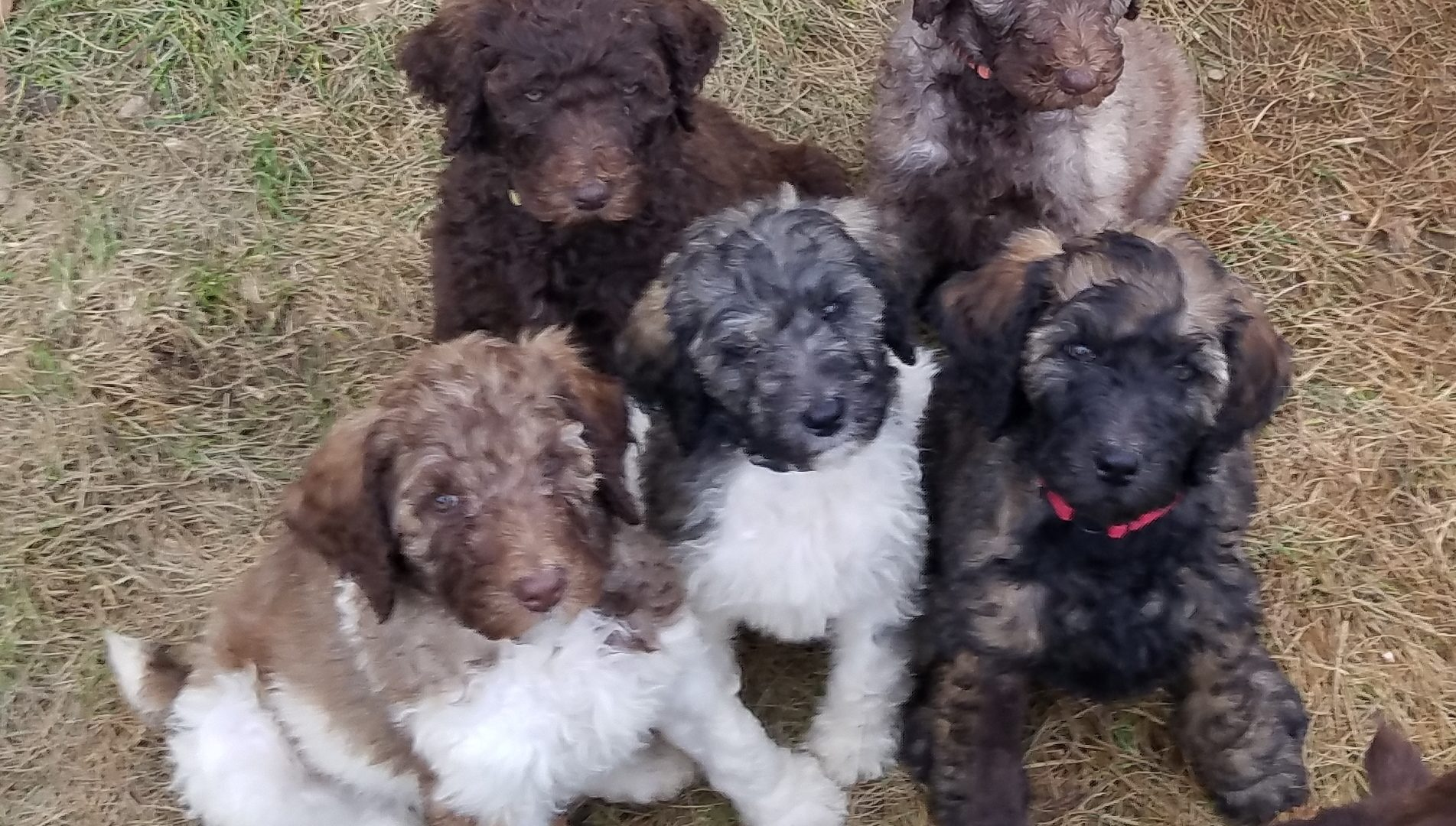 Puppy group photo